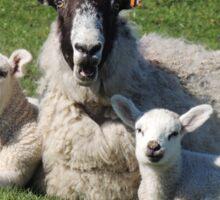 Ewe with her lambs Sticker