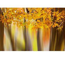 surreal autumn sonata Photographic Print