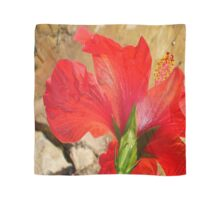Back Of A Red Hibiscus Flower Against Stone Scarf