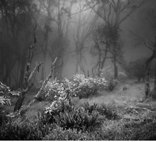 Mt Donna Buang  by Christine  Wilson Photography