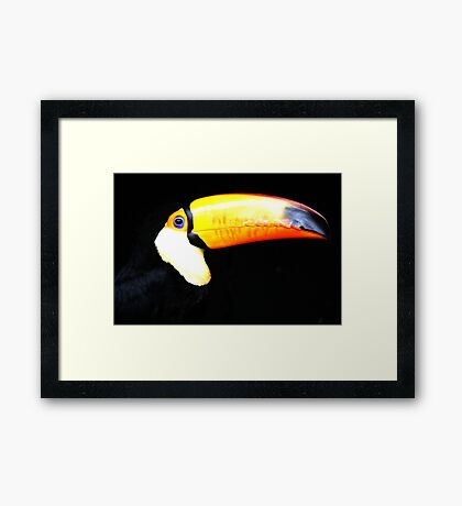 Toco Toucan! Framed Print