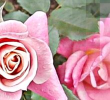 la rose Sticker