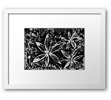 Wishing you a Merry Christmas with Poinsettias 3 Framed Print