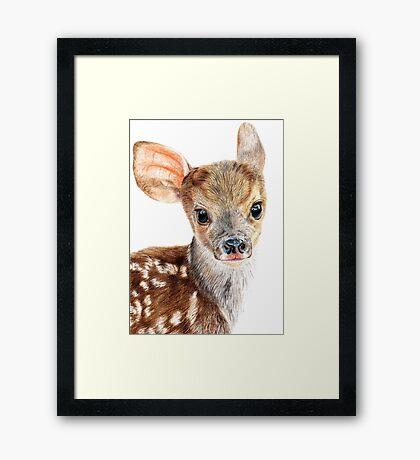 Cute Baby Deer/ Fawn Framed Print