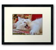 Cute Portrait Of A Yawning Van Cat Framed Print
