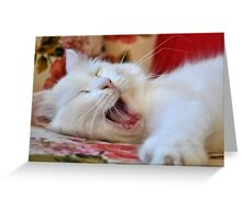 Cute Portrait Of A Yawning Van Cat Greeting Card