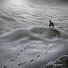 Wicked Winter by Igor Zenin