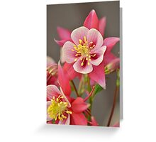 Pink columbine flowers Greeting Card