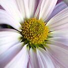 Just a pretty flower by Kristy Dalpez