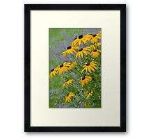 Yellow rudbeckia flowers Framed Print