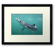Blue Shark Framed Print