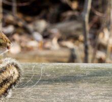 Cute Chipmunk Sitting on Wooden Beam Photo Sticker