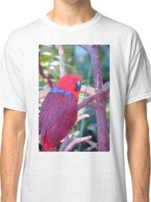 Colorful eclectic parrot Classic T-Shirt