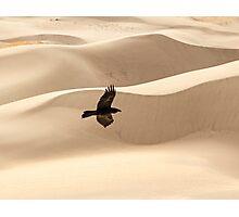 Desert Flight Photographic Print