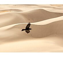 Desert Flight Photographic Print