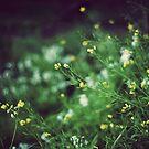 Spring flowers by KerrieMcSnap