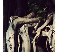 I am old and weary Photographic Print