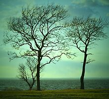 Windswept by jaeepathak