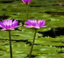 Waterlilies at Mt. Coot-tha Sticker