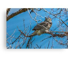 Great Horned Owl in the Wind Canvas Print