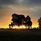 Sunset at Royal Park by cafuego