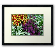 Clamatis and Sweet Williams Framed Print