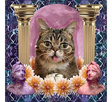 internet cat paradise Photographic Print