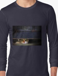 Curious Looks of Calico Cat Long Sleeve T-Shirt