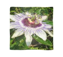 Passiflora Close Up With Garden Background Scarf