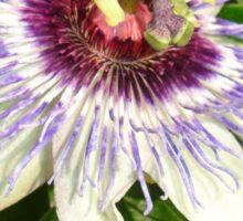 Passiflora Close Up With Garden Background Sticker