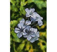 Delicate Plumbago Painted In Van Goch Style Photographic Print
