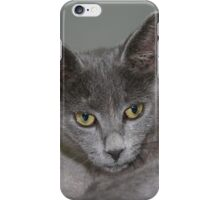 Beautiful Portrait of A Grey Russian Cross Tabby Cat iPhone Case/Skin