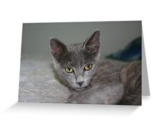 Beautiful Portrait of A Grey Russian Cross Tabby Cat Greeting Card