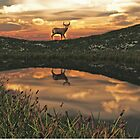 Sunset Deer Pond by Walter Colvin