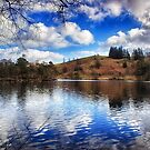 Lakeside Reflections by Vicki Field