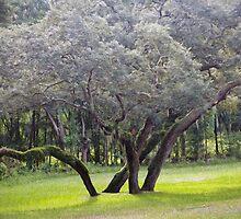 Wild Oak by Ostar-Digital