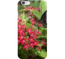 Singapore Butterfly Garden - Black iPhone Case/Skin