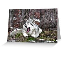 Just Yawning - Timber Wolf Greeting Card