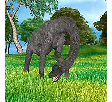 Dinosaur Brachiosaurus Photographic Print