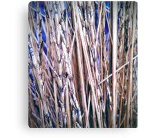 Grass Studies, Segments Canvas Print