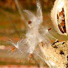 Blowing in the Wind by Joy Fitzhorn