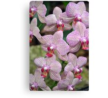 Pink spotted orchids Canvas Print