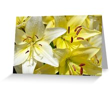Yellow lily flowers Greeting Card