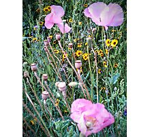 Front Yard Meadow 2014 Photographic Print