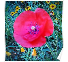 Front Yard Meadow, Red Poppy Poster
