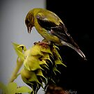 Sunflowers and Finches - 7 of 9 by Rosemary Sobiera