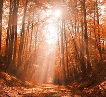 Path to Heaven by LadyDamona