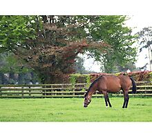 Irish Mare Photographic Print