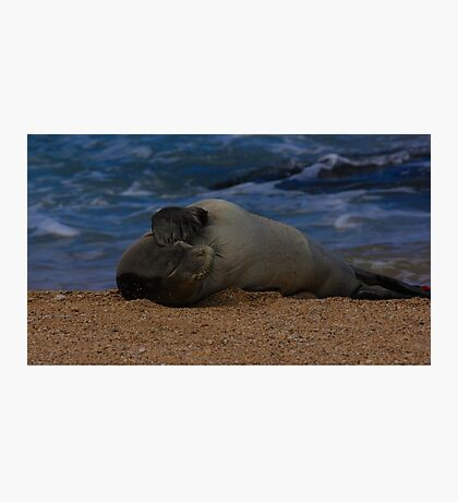 Help Save the Monk Seals Photographic Print