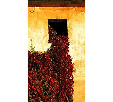 Red blanket Photographic Print
